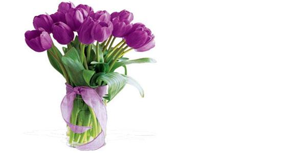 jual tulip ungu